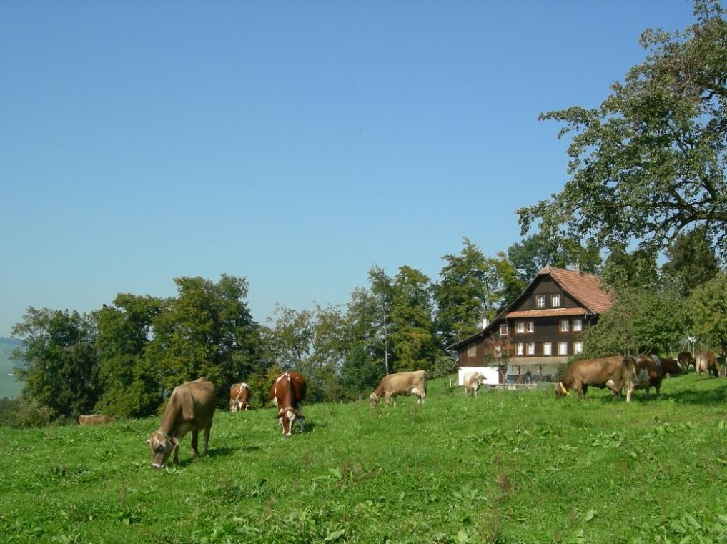 Gislerranch, Greppen