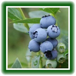 Blueberries, Heidelbeeren